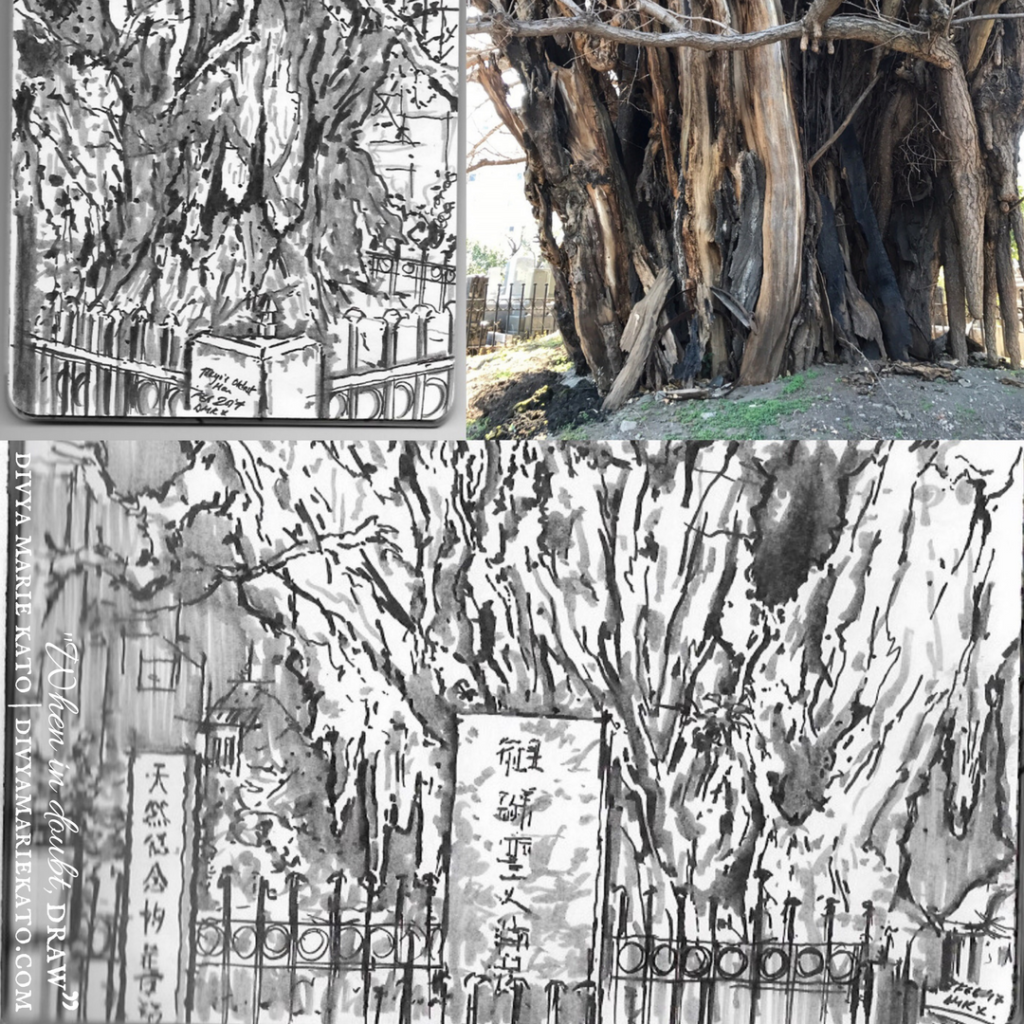 Tokyo's Oldest Tree DMK Drawing
