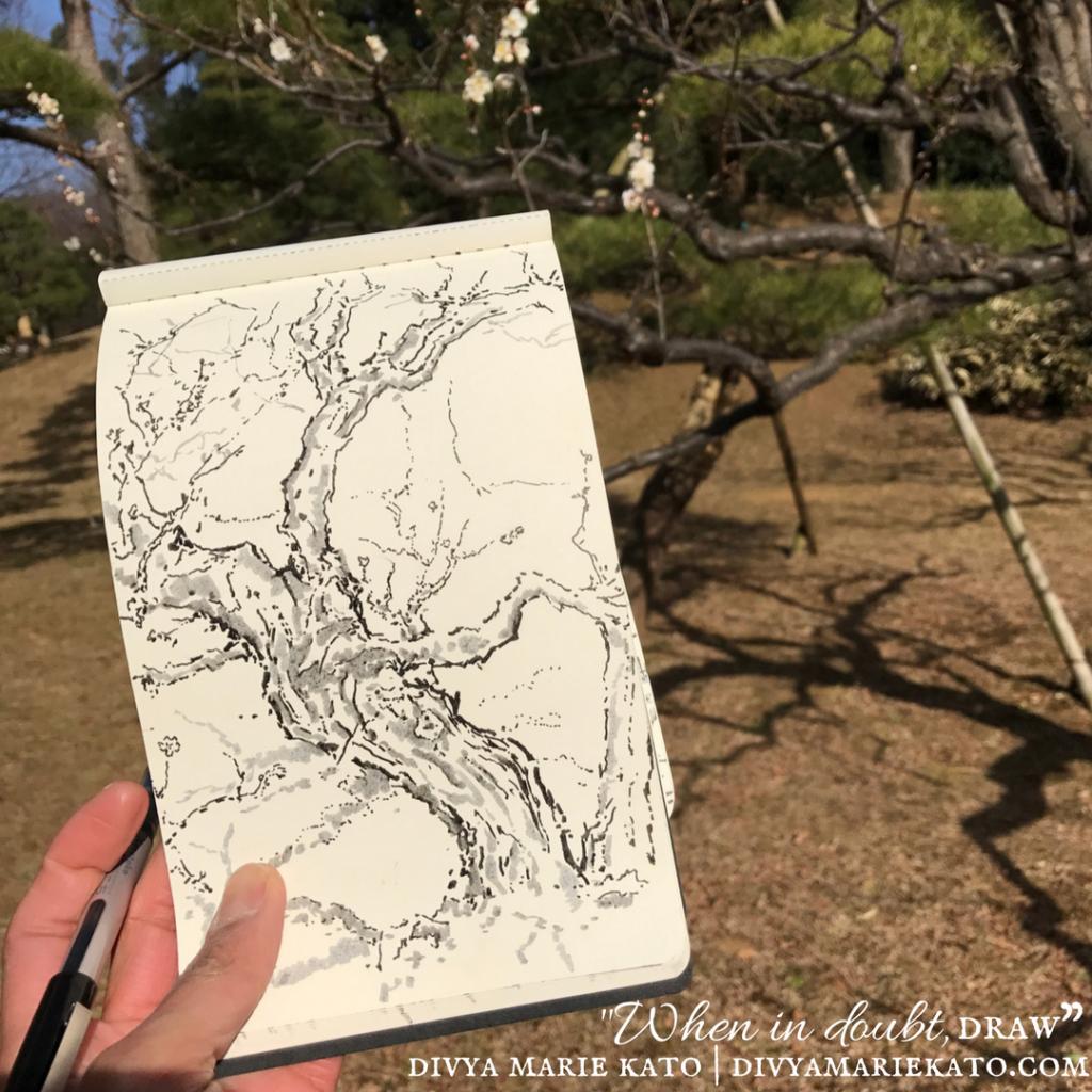 Plum Tree Drawing DMK