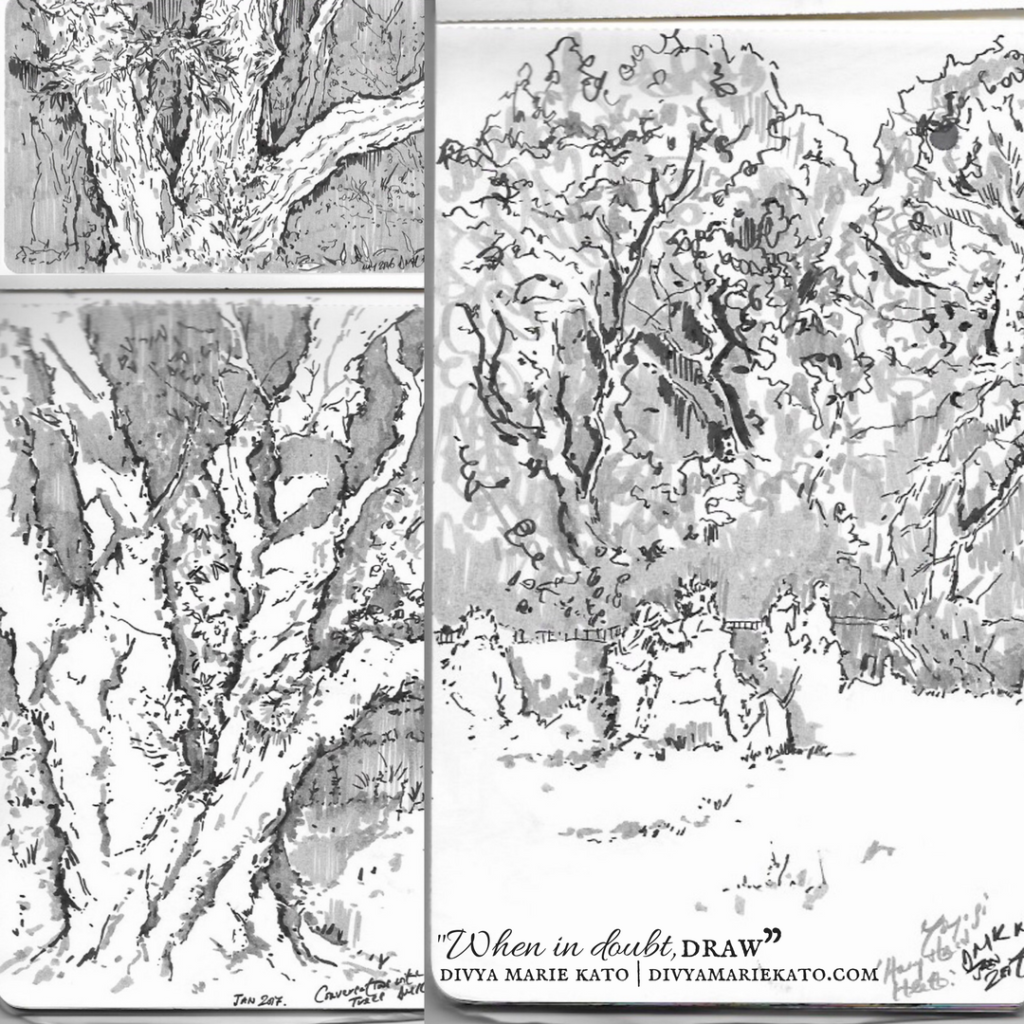 Meeting Remarkable Trees DMK Drawings