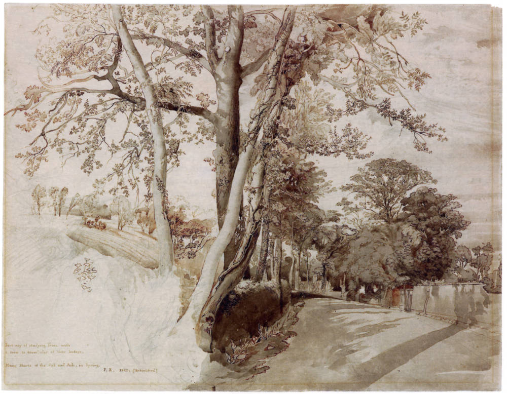 Trees In A Lane Ruskin